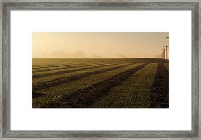 Foggy Morning Windrows Framed Print