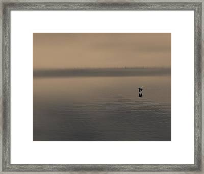 Framed Print featuring the photograph Foggy Pelican by Ron Dubin