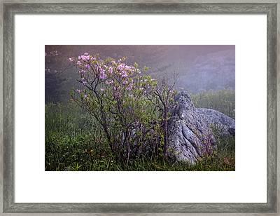 Foggy Pink Azalea Framed Print