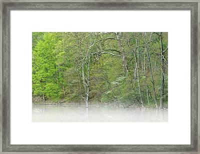 Foggy Spring Shoreline Hall Lake Framed Print