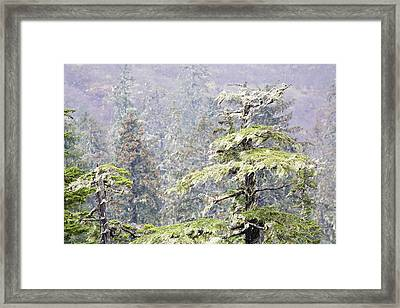 Foggy Tongass Rain Forest Framed Print by Eggers Photography