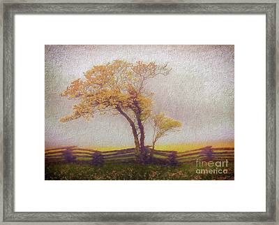 Foggy Tree And Fence In The Blue Ridge Ap Framed Print by Dan Carmichael