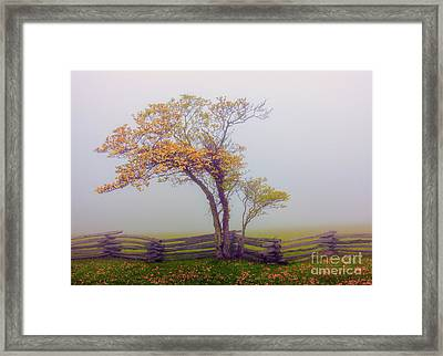 Foggy Tree And Fence In The Blue Ridge Framed Print