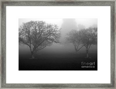 Foggy Trees Framed Print