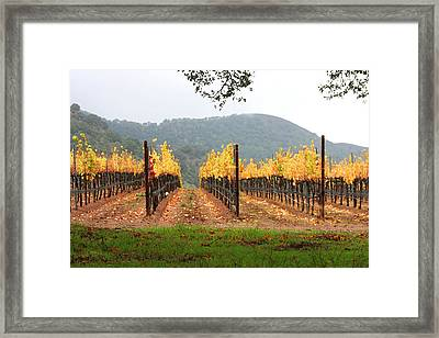 Foggy Vineyard Framed Print by Art Block Collections