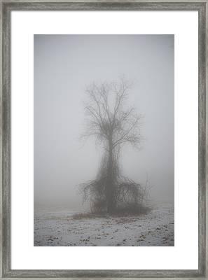 Foggy Walnut Framed Print