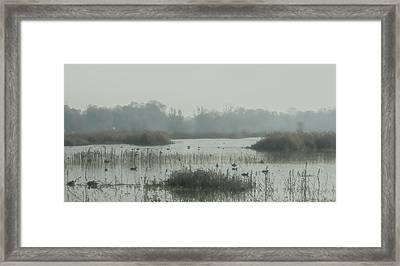 Foggy Wetlands Framed Print