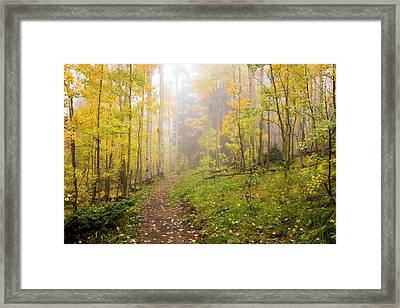 Foggy Winsor Trail Aspens In Autumn - Santa Fe National Forest New Mexico Framed Print