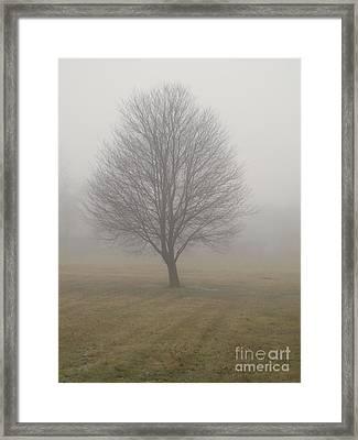 Foggy Winter Morn Framed Print by Ann Horn