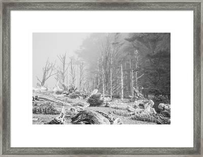Foggy Wood Framed Print by Ralf Kaiser
