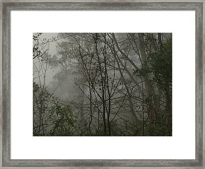 Foggy Woods Photo  Framed Print