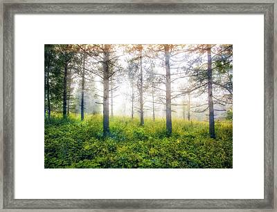 Foggy Woods - Wisconsin  Framed Print
