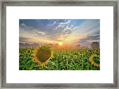 Foggy Yellow Fields Framed Print