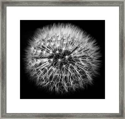 Folgore Framed Print