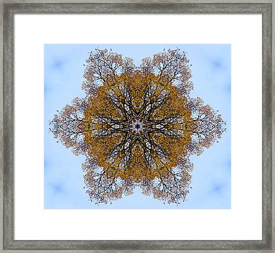 Foliage Creations 11 Framed Print
