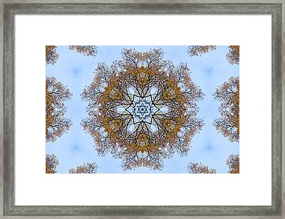 Foliage Creations 12 Framed Print by Lilia D