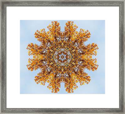 Foliage Creations 19 Framed Print