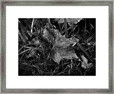 Foliage In The Grass Framed Print