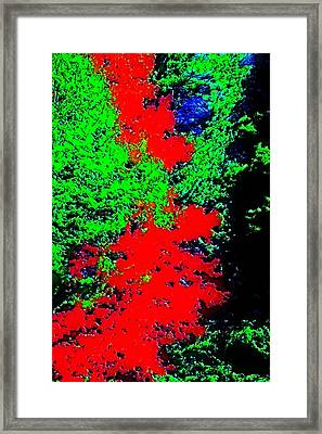 Foliage Trees Dd3 Framed Print by Modified Image