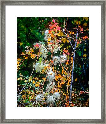 Foliage Twisted Colored Leaves Framed Print by John Brink
