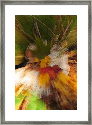 Foliage Zoom Framed Print by Nancy Marshall