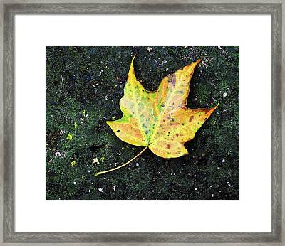 Foliation Framed Print by Tom Druin