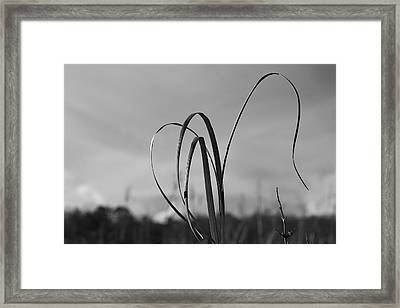 Folklore Framed Print by Lara Morrison