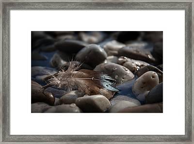 Follow Framed Print by Maggie Terlecki