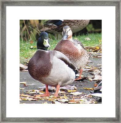 Quack..quack, Follow Me And I Follow You Later. Framed Print