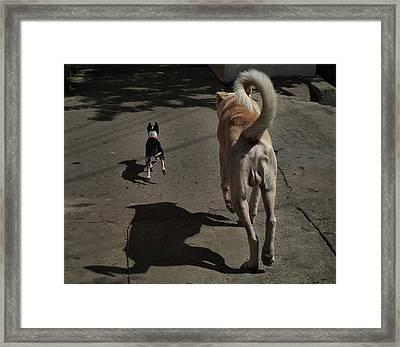 Follow Me... Framed Print by Xueling Zou