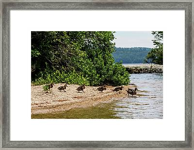 Follow Mom Framed Print by Brent L Ander