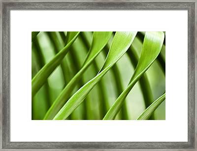 Follow My Lead Framed Print by Carolyn Marshall