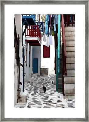 Follow The Cat In Mykonos Framed Print