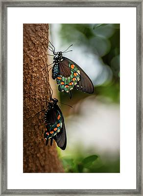 Framed Print featuring the photograph Follow The Leader by Cindy Lark Hartman