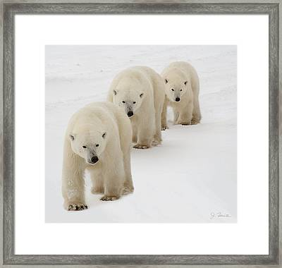 Follow The Leader Framed Print by Joe Bonita
