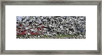 Follow The Leader Pg013 Framed Print by Yoshiki Nakamura