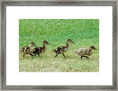 Follow The Leader Framed Print by Teresa Blanton