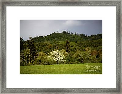 Follow The Light In The Forest Framed Print by Jon Burch Photography