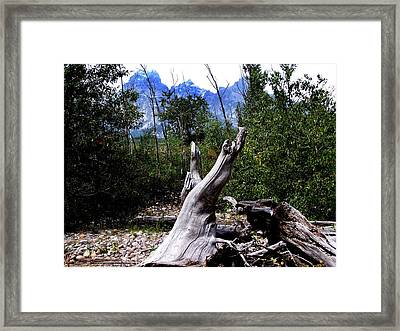 Follow The Track Framed Print by Debbie Hall