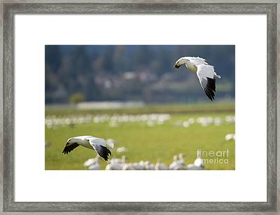 Follow You In Framed Print by Mike Dawson