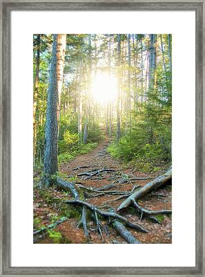 Follow Your Path Framed Print by Andrea Galiffi