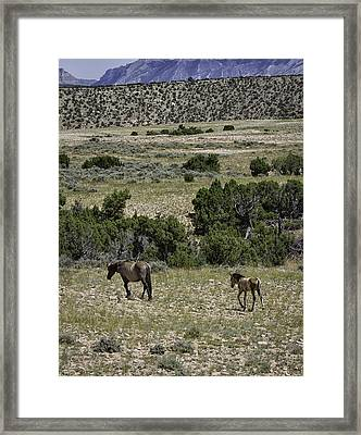 Following Momma Framed Print