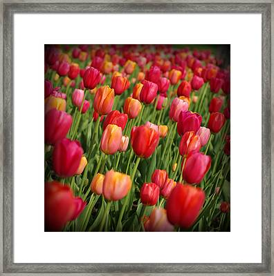 Following The Crowd Framed Print