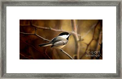 Following The Light Framed Print by Beve Brown-Clark Photography