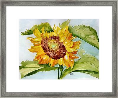 Following The Sun Framed Print by Ann Gordon