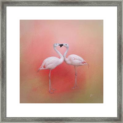Fond Flamingos Framed Print