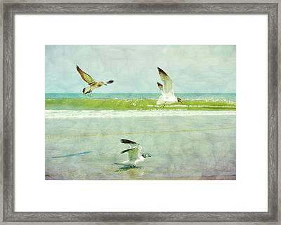 Food Fight Framed Print by JAMART Photography