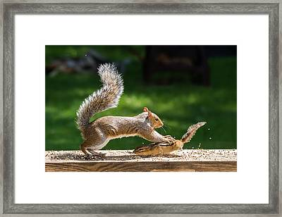 Food Fight Squirrel And Chipmunk Framed Print
