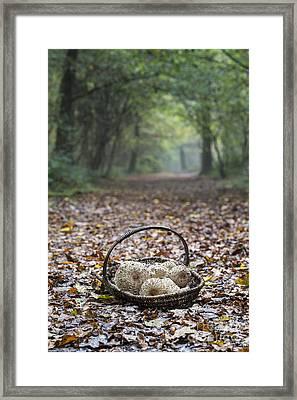 Food For Free Framed Print