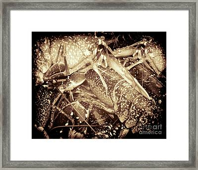 Food Of The Gods Framed Print by Baggieoldboy